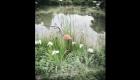 Fishers' Barn Pond
