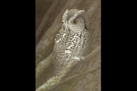 Screech Owl by Gail Bunting