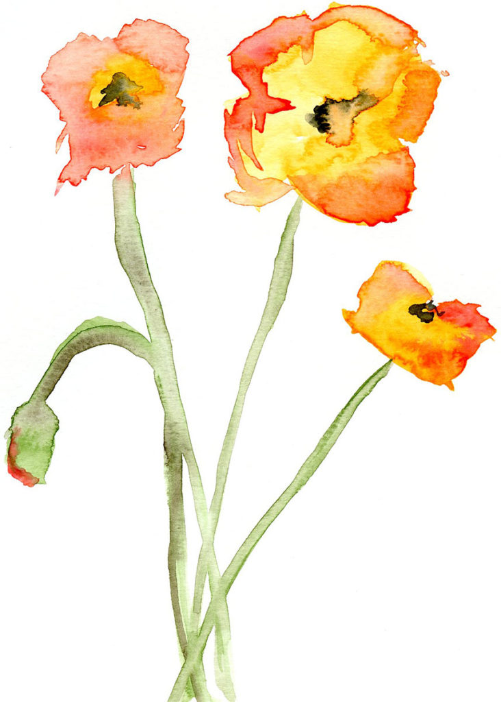 Poppies by Dawn Howell