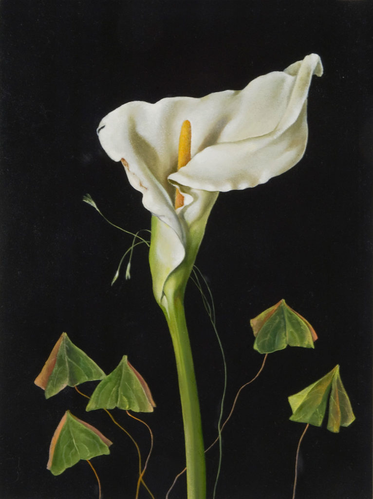 Calla Lillies and Oxalis by Judith Lamb